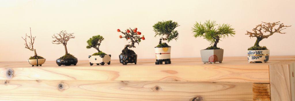 Collezione di bonsai tradizionali giapponesi