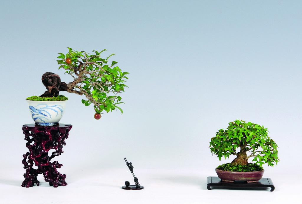 Arti tradizionali giapponesi: il bonsai shohin
