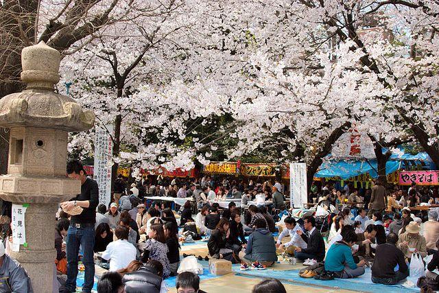 Hanami: festival dei fiori di ciliegio